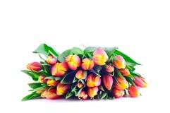 Bündel zweifarbige orangegelbe Tulpen lizenzfreie stockbilder