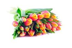 Bündel zweifarbige orangegelbe Tulpen stockbild