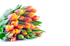 Bündel zweifarbige orangegelbe Tulpen lizenzfreie stockfotos