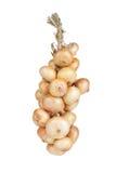 Bündel Zwiebeln lokalisiert auf weißem Hintergrund Lizenzfreies Stockbild