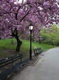 Bürgersteig im Park Lizenzfreie Stockfotografie