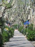 Bürgersteig mit Bäumen Lizenzfreie Stockbilder