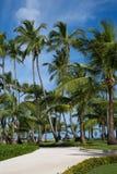 Bürgersteig zum Strand umgeben von den Palmen mit einem blauen Himmel stockfotos