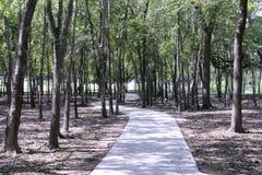 Bürgersteigsweg durch Bäume Stockbild
