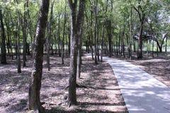 Bürgersteigsweg durch Bäume Stockbilder