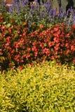 Büro-Pflanzen Stockbild