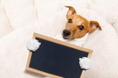 Büroangestellt-Chefhund Lizenzfreie Stockfotos