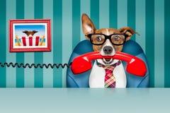 Büroangestellt-Chefhund stockbild