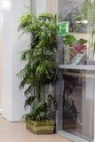 Büroblume Stockbild