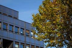 Bürogebäude und Herbstbaum Stockbild