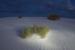 Bürste auf Sanddünen. Lizenzfreie Stockfotografie