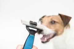 Bürste für den Hund, der mit dem Pelz lokalisiert auf Weiß sich pflegen und Hund am Hintergrund stockfotos