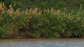 Bürsten Sie auf Bank von Fluss stock video footage