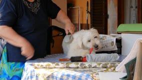 Bürsten Sie den Hund über der Tabelle stock video