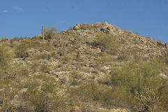 Büsche auf felsigem Bergabhang Stockbilder