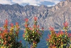 Büsche gegen Berge Stockbilder