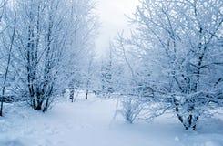 Büsche und Bäume bedeckt mit Frost an einem bewölkten Tag Stockbilder