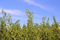Büsche und blauer Himmel Stockfoto