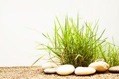 Büschel des Grases auf Boden auf Weiß Stockfotografie