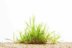 Büschel des Grases auf Boden auf Weiß Lizenzfreie Stockbilder