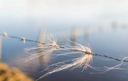 Büschel des Rosshaars verflochten mit dem Stacheldraht Stockfotografie