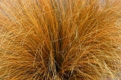 Büschel-Gras Queenstown, Neuseeland Lizenzfreie Stockfotos