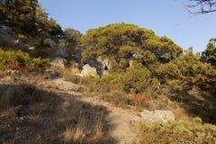 Büschel von Steinen im Wacholderbuschwald Lizenzfreies Stockfoto