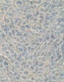 Büttenpapier mit Pfirsich-Spitze und Aqua Background Lizenzfreie Stockbilder