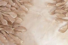 Büttenpapier mit trockenen Herbststartwerten für zufallsgenerator Stockbild