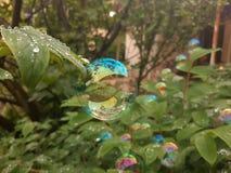 Bąbel na roślinie zdjęcie royalty free