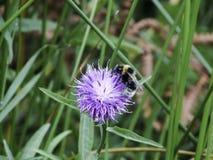 Bąbel pszczoła Obraz Stock