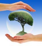 bąbla ręki drzewo Zdjęcia Royalty Free