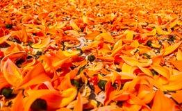Bękarci tekowy kwiat Zdjęcia Stock