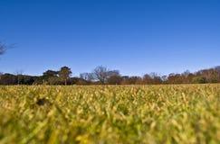 błękit śródpolny nieba kolor żółty Zdjęcia Royalty Free