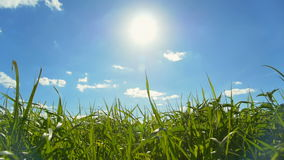 błękit chmury pola zieleni nieba biel zbiory