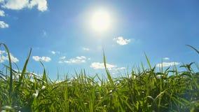 błękit chmury pola zieleni nieba biel zdjęcie wideo