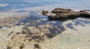 Błękit dziury: Podwodni rafy i przypływu baseny Obrazy Stock