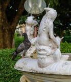 Błękit gołąbka w parku z rzeźbami w tle krzaki i drewno zdjęcia stock