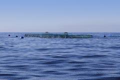 błękit gospodarstwa rolnego ryba horyzontu oceanu morze Zdjęcia Royalty Free