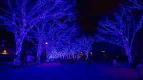 Błękit iluminował światło przy ulicą w Harajuku Tokio zdjęcie wideo