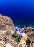 Błękit kwitnie na skałach Zdjęcie Stock