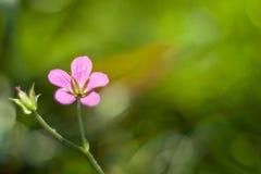 Błękit kwitnie na zamazanym tle Zdjęcie Stock