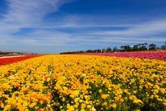 błękit kwitnie nieba kolor żółty obrazy stock