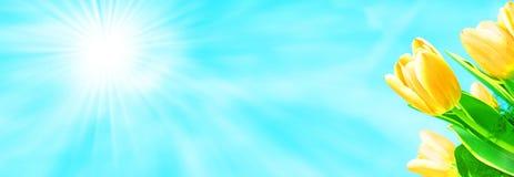 błękit kwitnie niebo Zdjęcia Stock