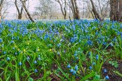 Błękit kwitnie przy dzikim ogródem Podróży fotografia Zdjęcia Royalty Free