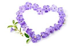 Błękit kwitnie w kształcie serce Zdjęcie Royalty Free