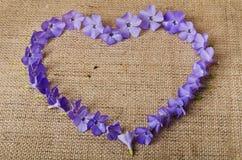 Błękit kwitnie w kształcie serce Fotografia Royalty Free