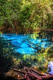 Błękit lub szmaragdowy basen w parka narodowego Sa Morakot, Krabi, Tajlandia Fantastyczny błękitny jezioro po środku lasu tropika Zdjęcie Royalty Free