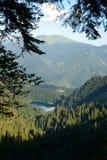 Błękit perła las zdjęcia royalty free