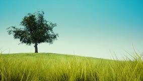 błękit pojedynczy nieba drzewo zbiory